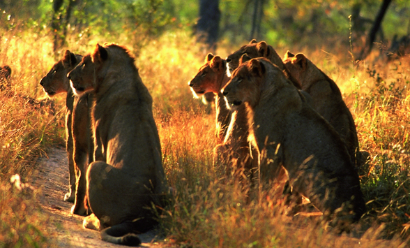 Safari holidays in South Africa