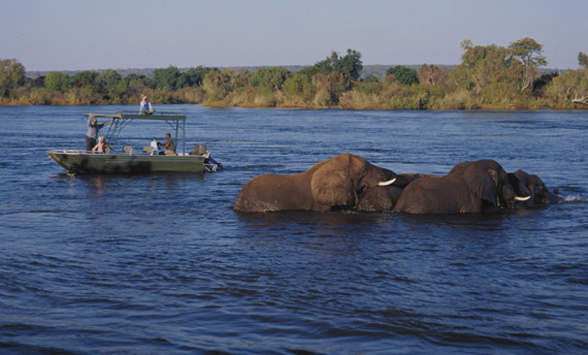 elephants in the Zambezi River