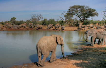 Safari holidays in Botswana