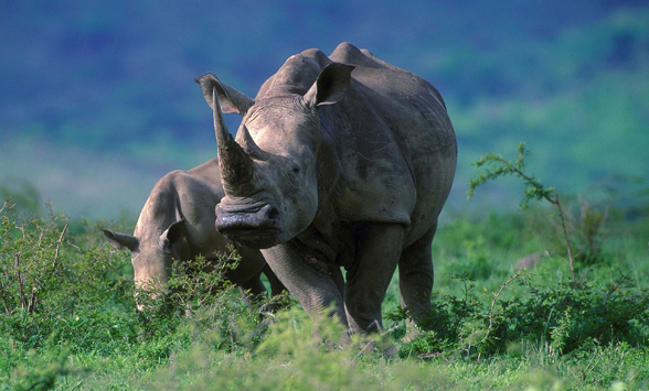 Safari and honeymoons in South Africa.