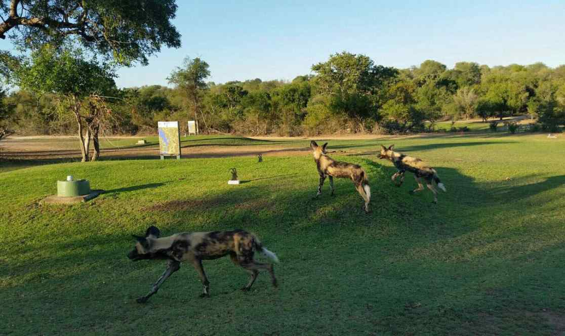 Kruger Golf safaris