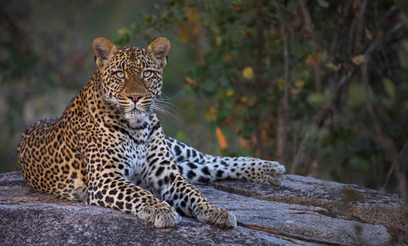 Top safari lodges in the Kruger, South Africa.