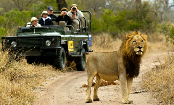 Best game viewing in south africa
