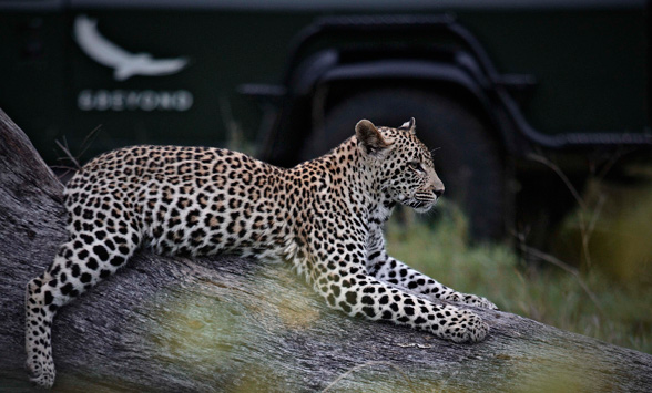 Safari and golf holidays in South Africa.