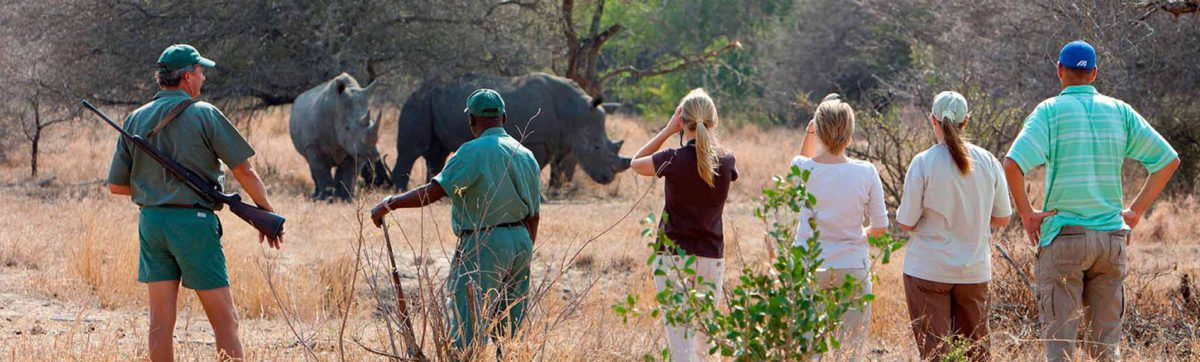 guests and rangers walking through the Kruger Park tracking a rhino.