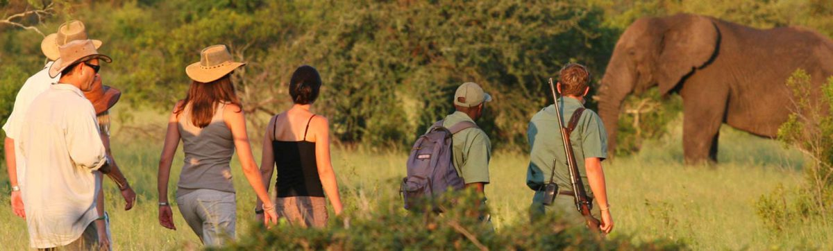 Walking safaris in the Kruger National park.