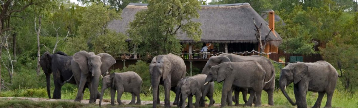Top safari lodges in the sabi sands private game reserve.