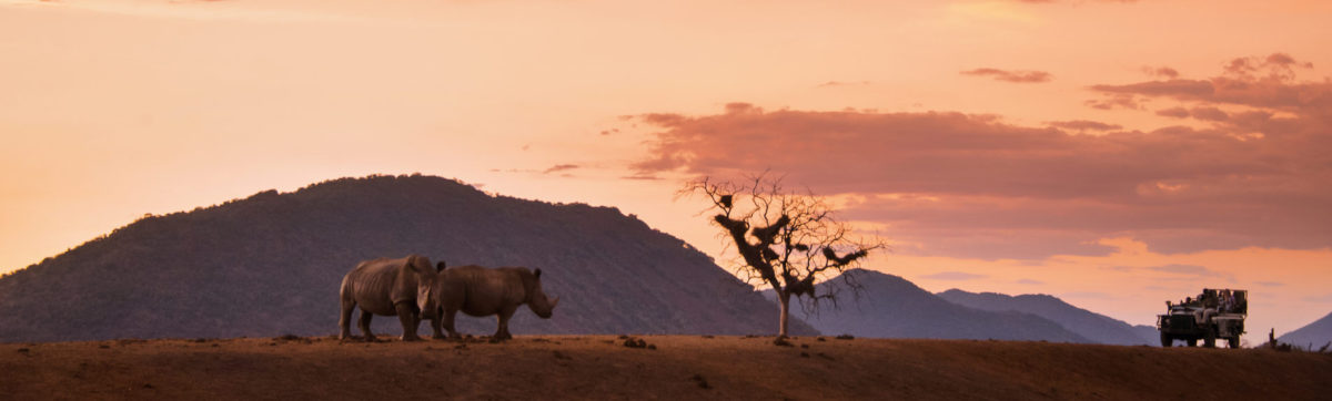Sunset and two rhinos with a safari game drive vehicle.