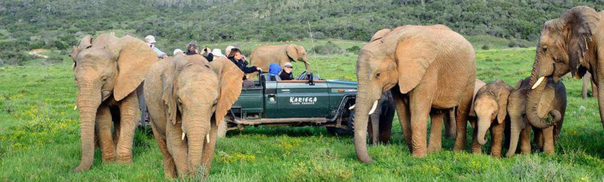 Game viewing vehicle surrounded by elephant family.