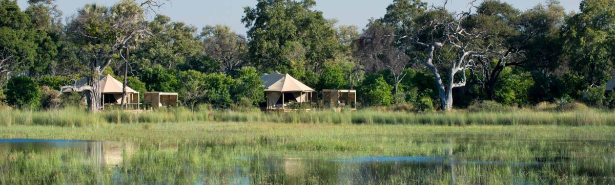 safari tents nestled in the trees overlooking the flood plains.