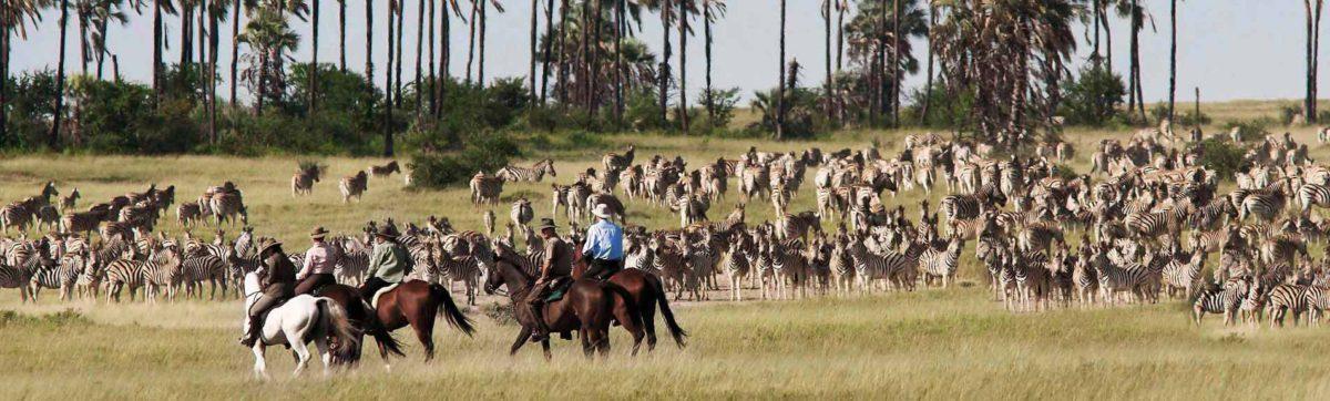 Riding across the plains in the Kalahari following the zebra migration.