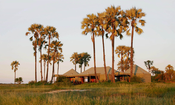 Jacks Tented camp nestled below the Ilala Palms in the Kalahari Desert.