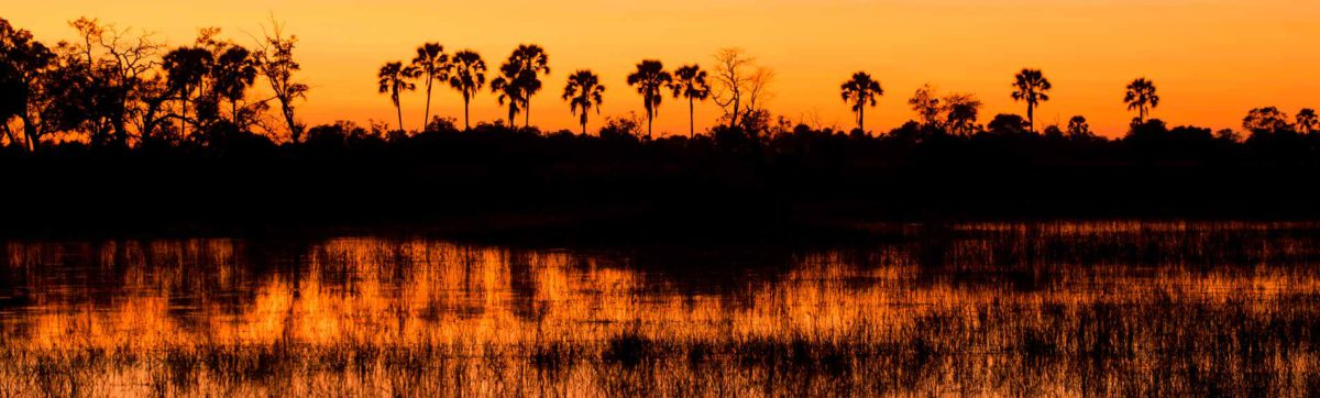 orange and red skies above the Ilala palm trees reflected in the channel of the Okavango Delta