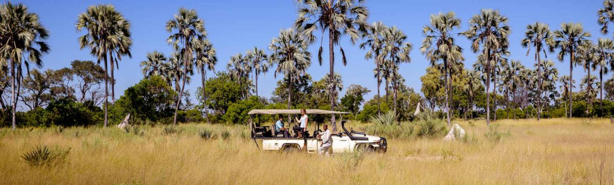 game viewing on a drive from Stanley's Camp into the Okavango Delta.