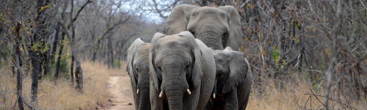 Elephant family walking along a road.