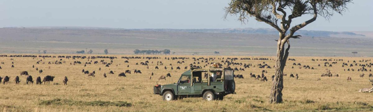 great migration in the Masai Mara, guests on a game drive.