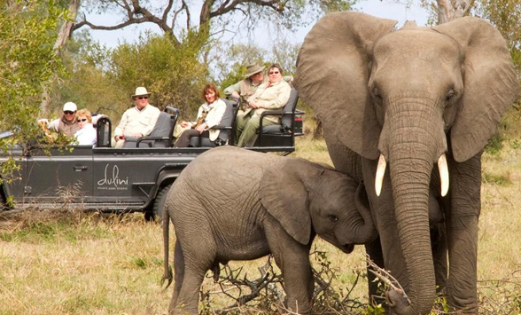mother and baby elephant being watched by guests in a game drive vehicle